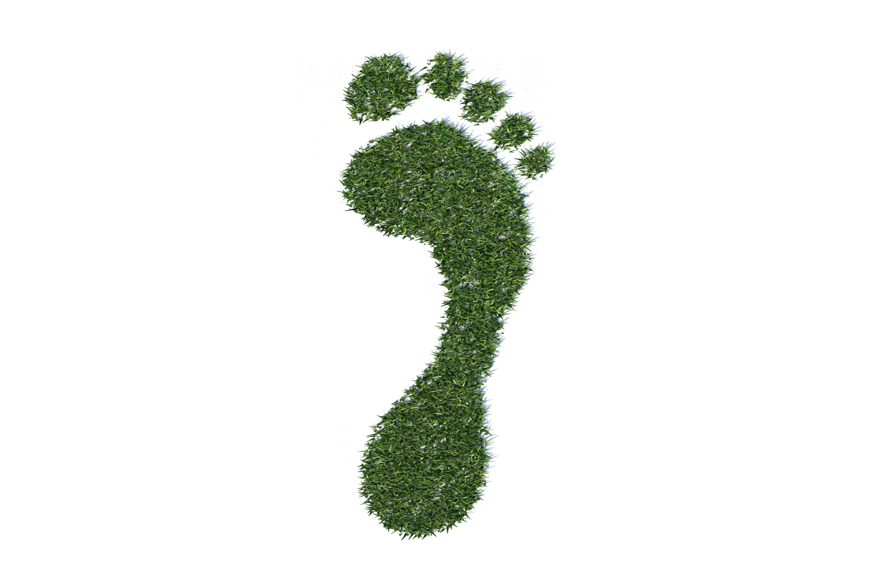 5 Things You Could Do To Reduce Your Carbon Footprint